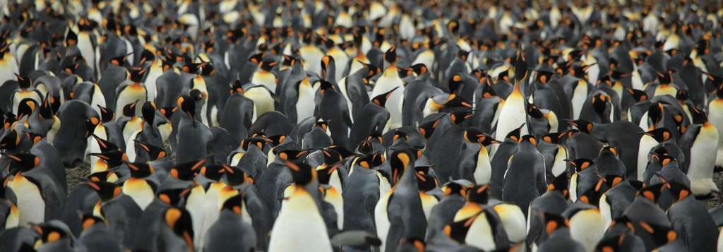 dito_segmentacao_clientes_crm_marketing_pinguins